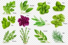 12 pictures of herb leaves