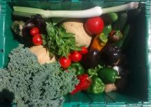 vegetables in a green bin for a CSA share